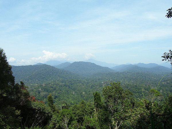 Taman Negara National Park, #Malaysia (foto: Tian Yake)  http://www.zuidoostaziemagazine.com/de-belangrijkste-bezienswaardigheden-van-maleisie