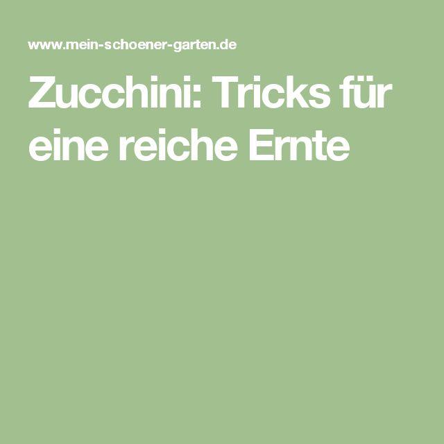 Zucchini: Tricks für eine reiche Ernte