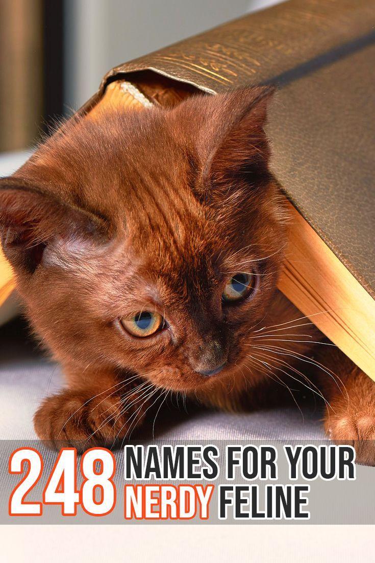 A Huge list of nerdy names f… Cat Names. Cat Name. Cat