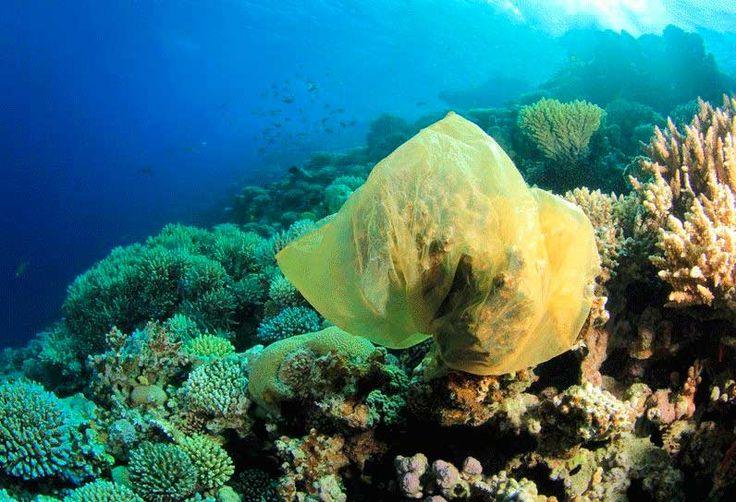 Bolsa de plástico sobre un coral