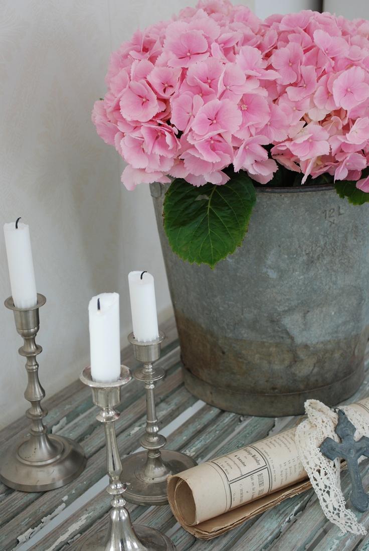 Vita Ranunkler: Rosa blommor