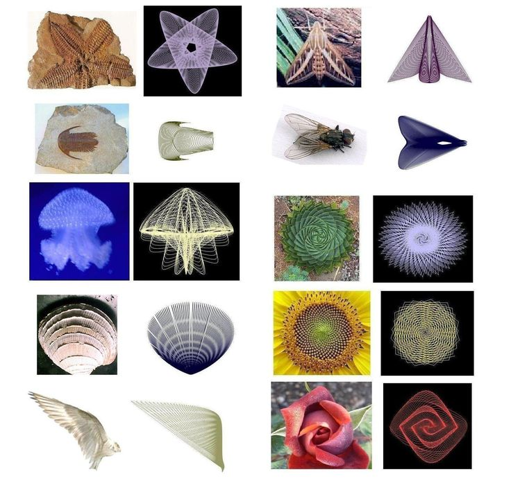 Biological structures compared with yours approximations  by mean of parametric equations