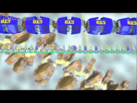 The 'Central Dogma' of molecular biology is that 'DNA makes RNA makes protein'.  This anime shows how molecular machines transcribe the genes in the DNA of every cell into portable RNA messages, how those messenger RNA are modified and exported from the nucleus, and finally how the RNA code is read to build proteins.    The video was made by RIK...