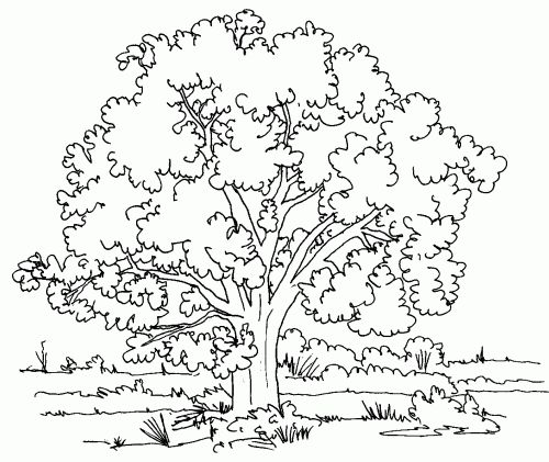 tree-coloring-pages