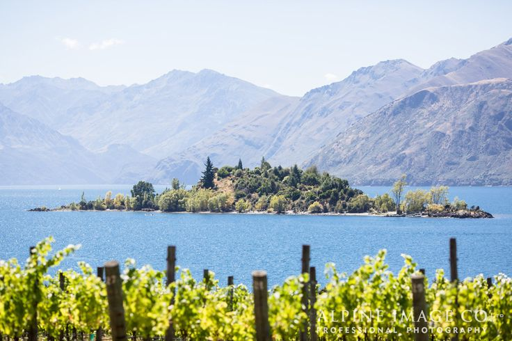 Ruby Island from the vines