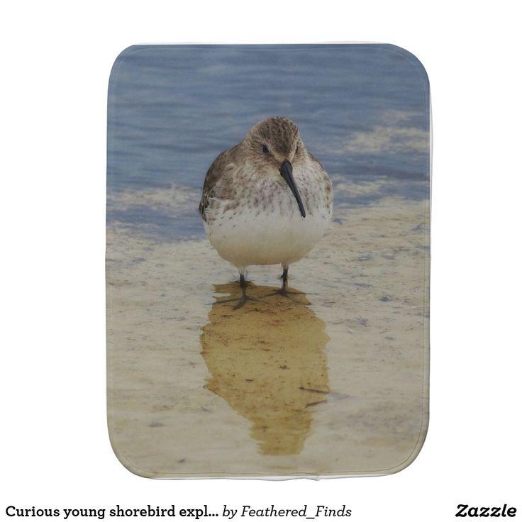 Curious young shorebird exploring burp cloth