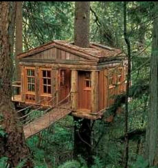 1000 images about tree houses on pinterest kid tree for Adult treehouse plans