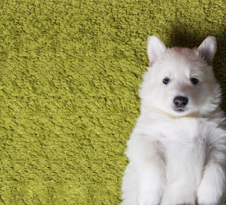 Prepare yourself for what might be our cutest quiz ever. Pick the puppy you like best to find out which Disney character you are destined to be.
