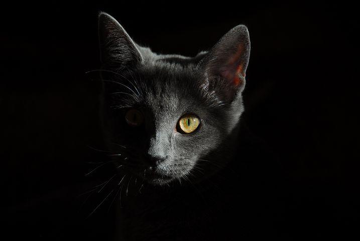 Kat, Dieren, Katten