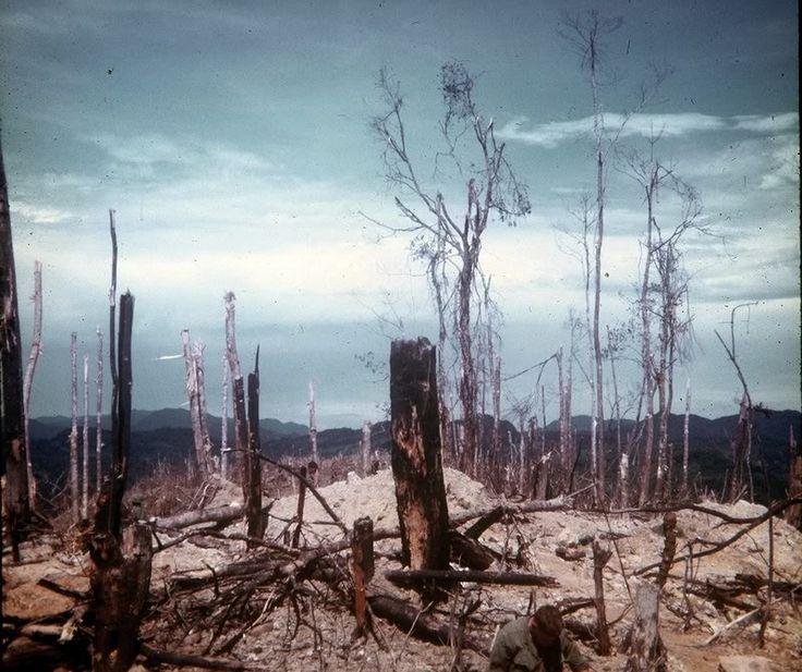 (2) Photos of Hamburger Hill after the battle, 20 May 1969....
