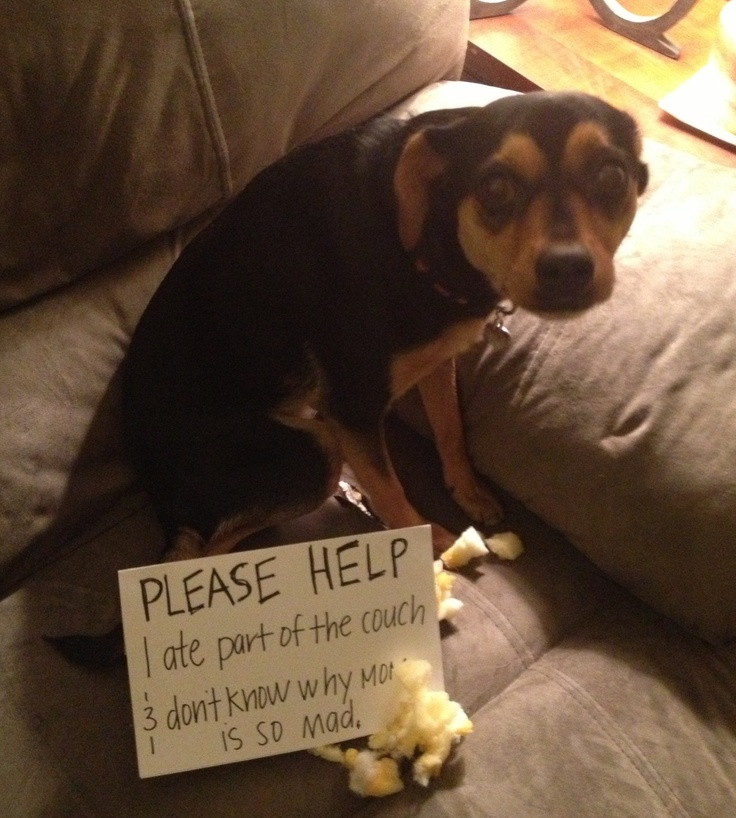 100 Best Pet Shame Images On Pinterest Funny Animals