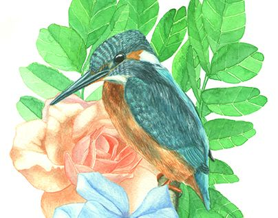 """Check out new work on my @Behance portfolio: """"Kingfisher"""" http://be.net/gallery/45366549/Kingfisher"""