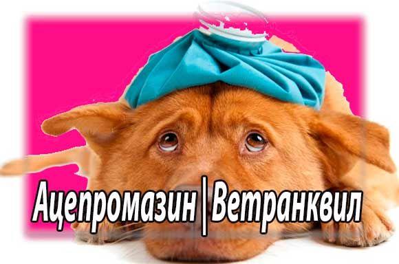 Инструкция по применению ветранквила (ацепромазина) собакам и кошкам