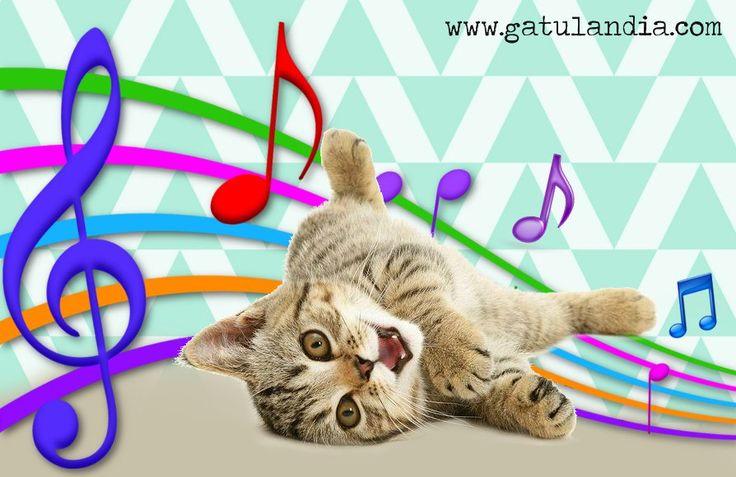La #musica que maravilla a los #Gatos #Gatulandiablog <3