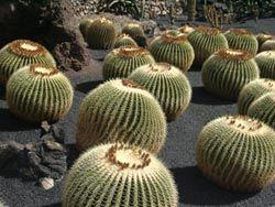 Jardin de Cactus - Lanzarote - Kanarische Inseln