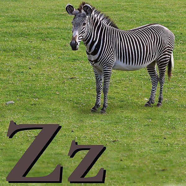 Fichier:Z is for Zebra.jpg