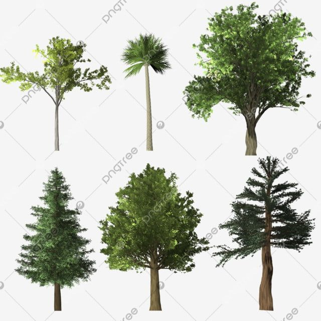 Trees Png Collection Tree Trees Tree Png Png Transparent Clipart Image And Psd File For Free Download Clipart Images Watercolor Background Watercolor Trees