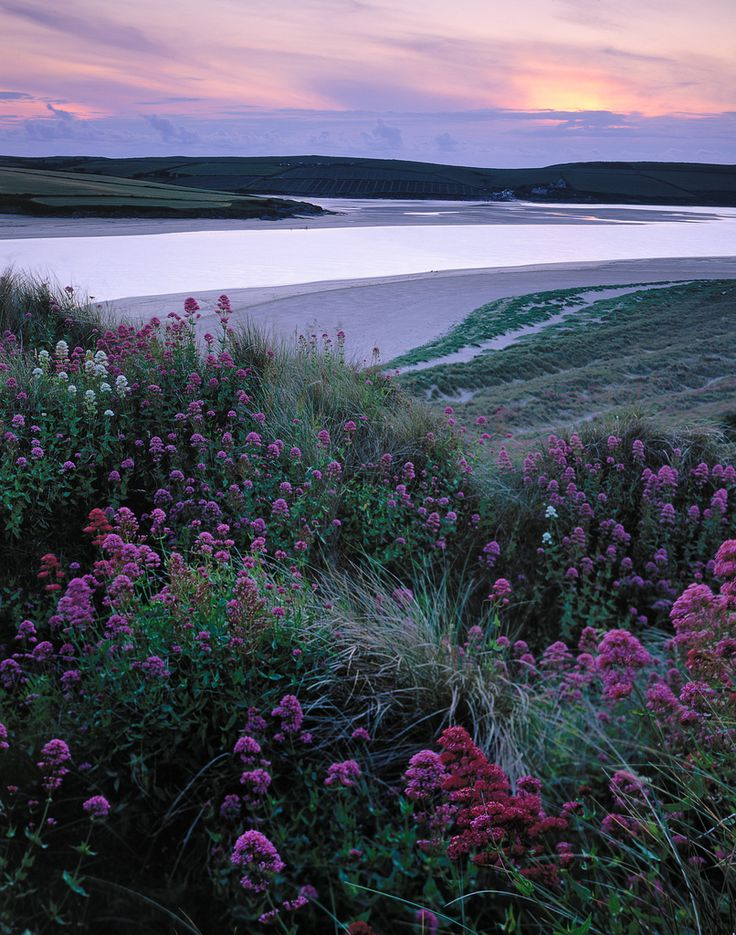 Wild Valerian at Padstow, Cornwall, England by Tim Parkin