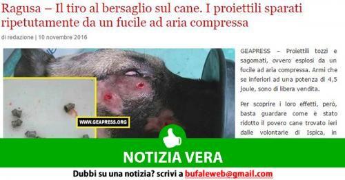 Attualità: #NOTIZIA #VERA #Ragusa  Il tiro al bersaglio sul cane. I proiettili sparati... (link: http://ift.tt/2fu3bwG )