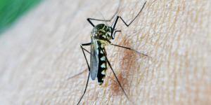Comment fabriquer un insecticide fait maison contre les moustiques