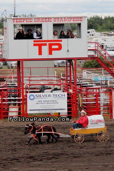 Mini-Chuckwagaon Racing at Teepee Creek Stampede Rodeo Event - County of Grande Prairie, Alberta, Canada | FollowPanda.Com