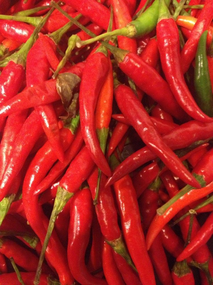 "HANOI RED Pepper (Capsicum annuum)Vietnamese market chili which is 3"" in length and quite hot."