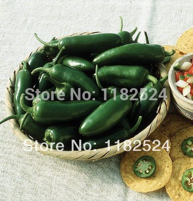 >> Click to Buy << Earliest jalapeno - Early Jalapeno (OG) Pepper Seeds Capsicum annuum vegetables seeds (100 SEEDS) #Affiliate