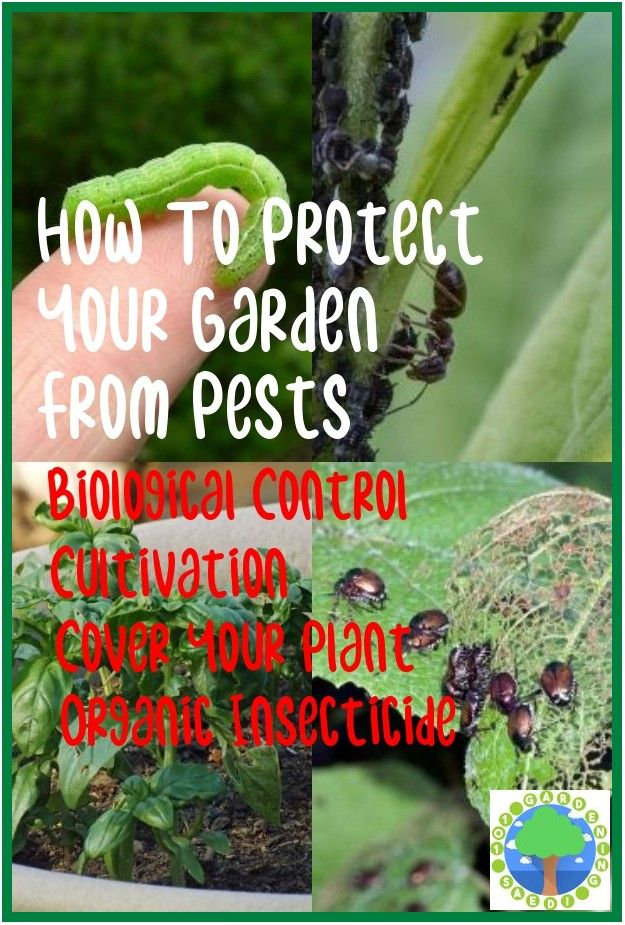 Pin On Natural Pest Control