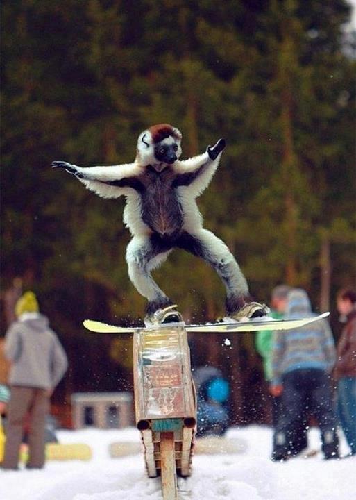 snowboarding. circus antics