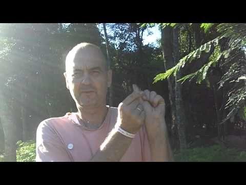 ▶ Moringa-Heimplantage - Moringa Samen Anzucht - Einpflanzen Teil 1 - YouTube