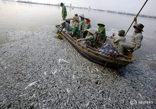 Workers collect dead fish floating in the polluted West Lake in Hanoi, Vietnam October 2, 2016. REUTERS/Kham #vietnam #fish #reutersphotos #reuters #pollution