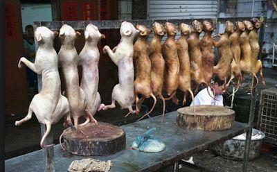 Festival Makan Daging Anjing The Jinhua Hutou di Cina Dibatalkan Tapi Yulin…