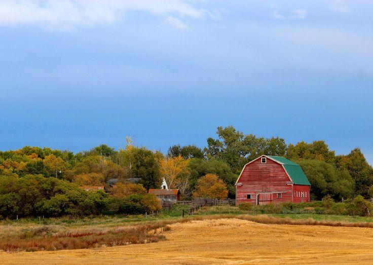 Red Barn In Saskatchewan By Krista Routledge