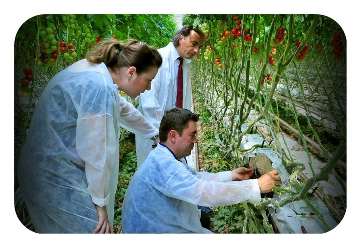 Total Greenhouse Management is DKG's approach to greenhouse sector