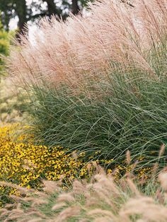 Maidengrass. One of the most common grasses, maidengrass is big, beautiful, and easy to grow. It offers narrow, arching foliage (many selections are variegated; look for them to add more color to your landscape) and silvery plumes that are enchanting when the light catches them just right.    Name: Miscanthus sinensis    Growing Conditions: Full sun and moist, well-drained soil    Size: To 8 feet tall    Zones: 4-9