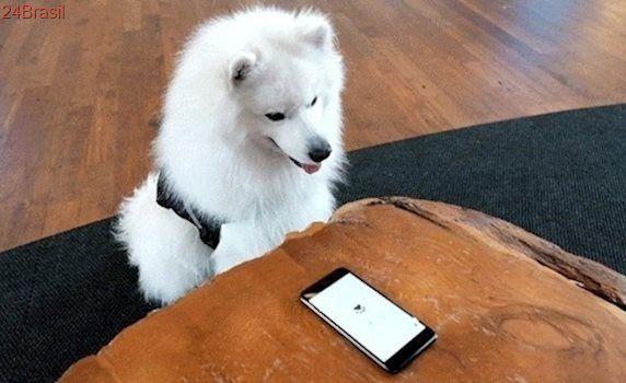 Gigante de novo na brincadeira: Google inventa busca para cães e assistente gnomo... no 1º de abril