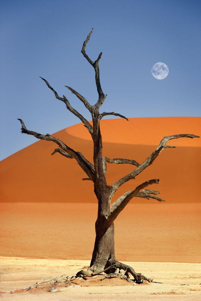 Africa | Dead tree in Deadvlei, red sand dunes in Sossusvlei, Namib Desert, Namib-Naukluft National Park, Namibia | © Dietmar Temps