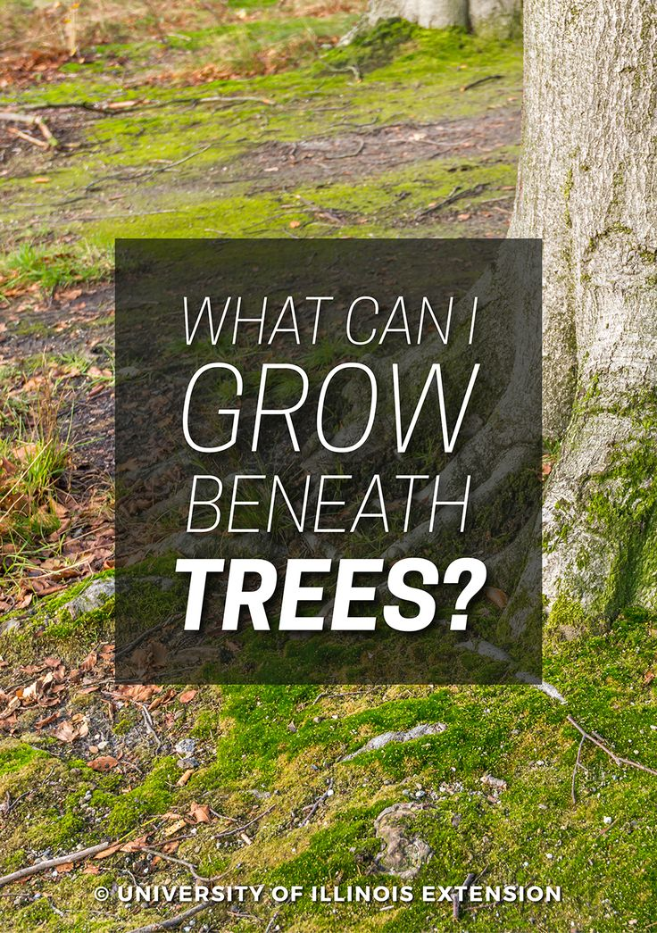 what to grow under a tree