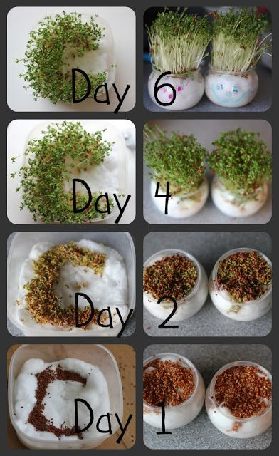 Growing Cress Heads and Cress Initials! - The Imagination Tree. it grows very quickly like the initial idea
