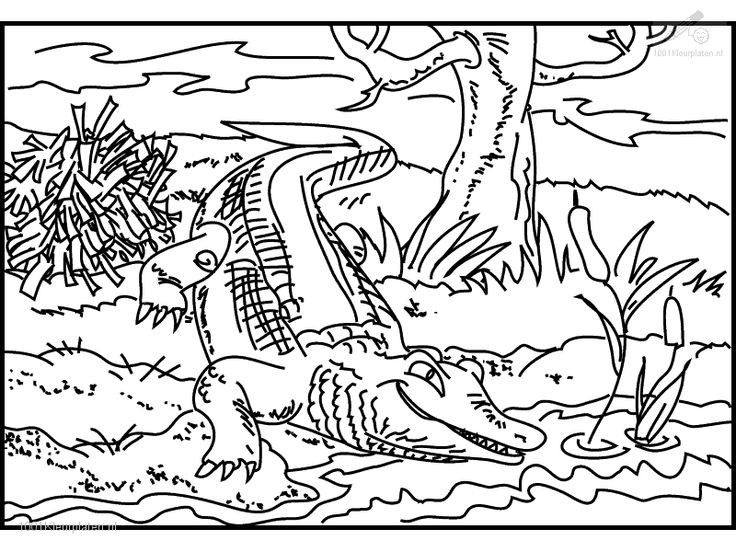 printable crocodile coloring page for older kids - Crocodile Coloring Pages Kids