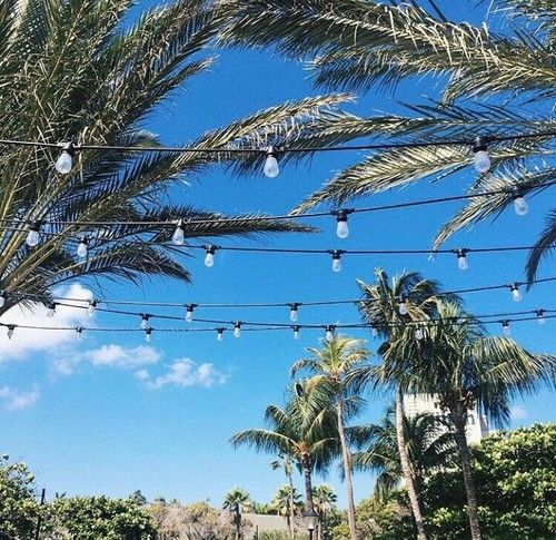 Not Many Things Say Summer Is Here Like Palm Trees And Patio Lights.  #beachlife