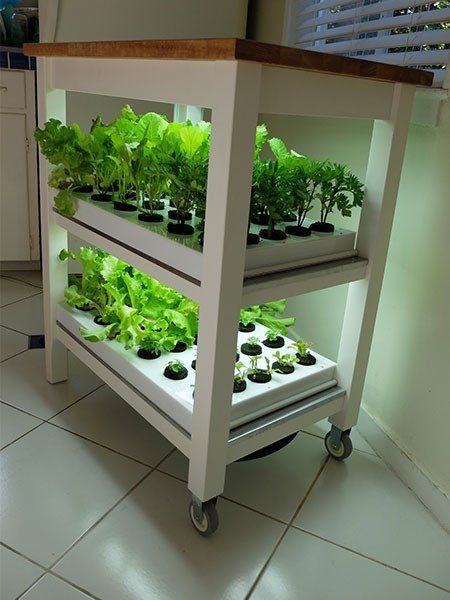 This Startup Is Building A Keurig For Fresh Herbs Herbs 400 x 300