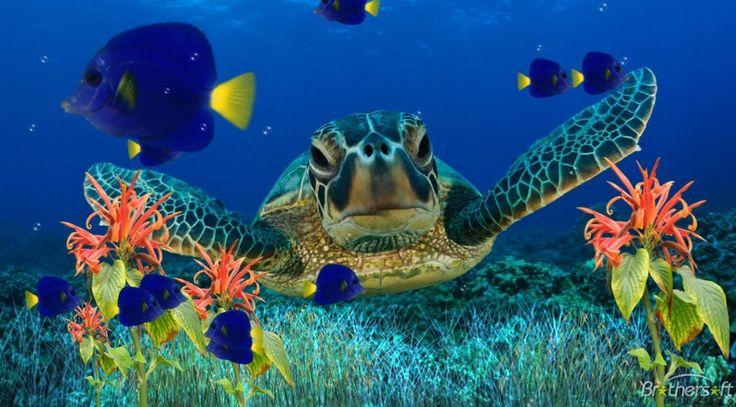 Live Fish Tank Screensaver | ... Aquarium Screensaver, Coral Reef Aquarium Screensaver 1.0 Download