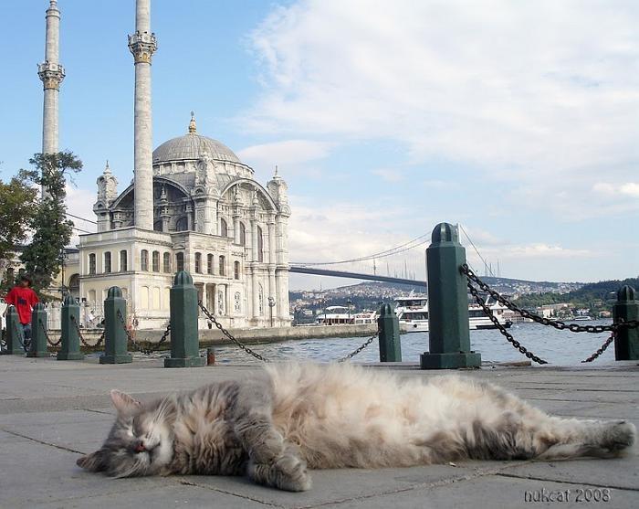 Mecidiye Mosque-Ortaköy (Zzzzzzzzzzzzzzzz! ) see more at http://blog.blackboxs.ru/category/funny-cats/