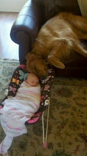 OMGBest Friends, Crazy Dogs, Sweets, Golden Retrievers, Dogs Show, Baby Animal, Baby Dogs, New Baby, Dogs Baby