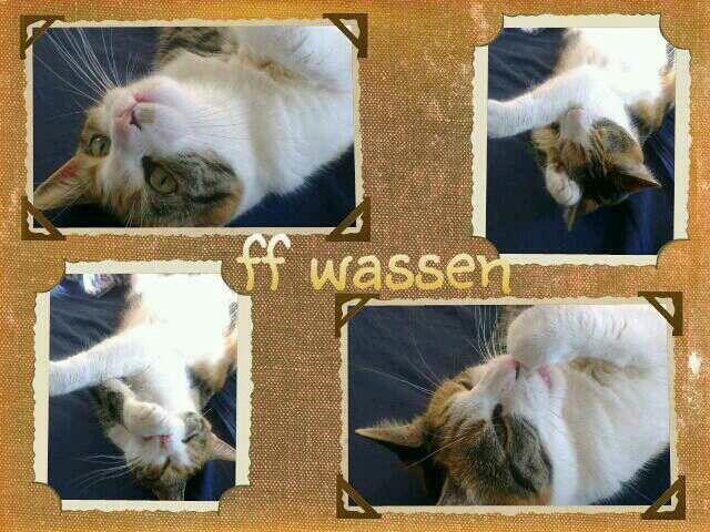 Washing......#cat