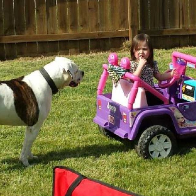 3-year-old girl mauled by dog she's been around since she was born