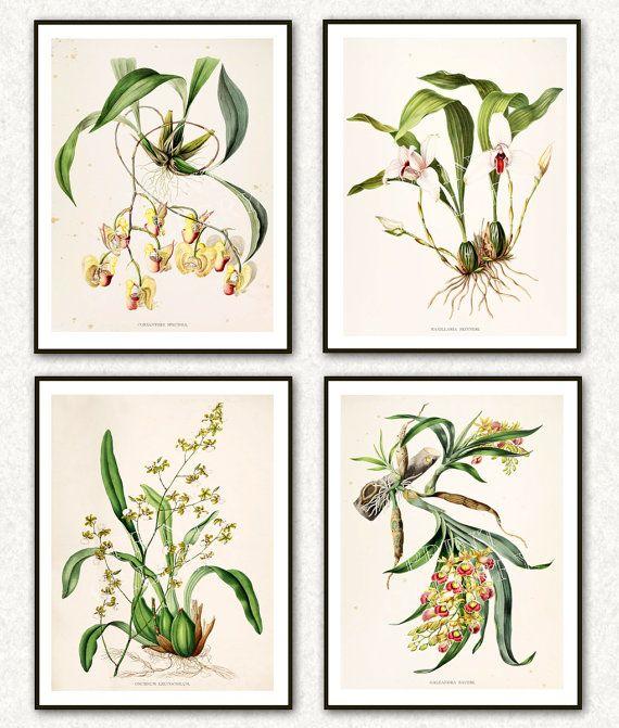Orchids Botanic Prints Antique Botanical by PrintGallerySets