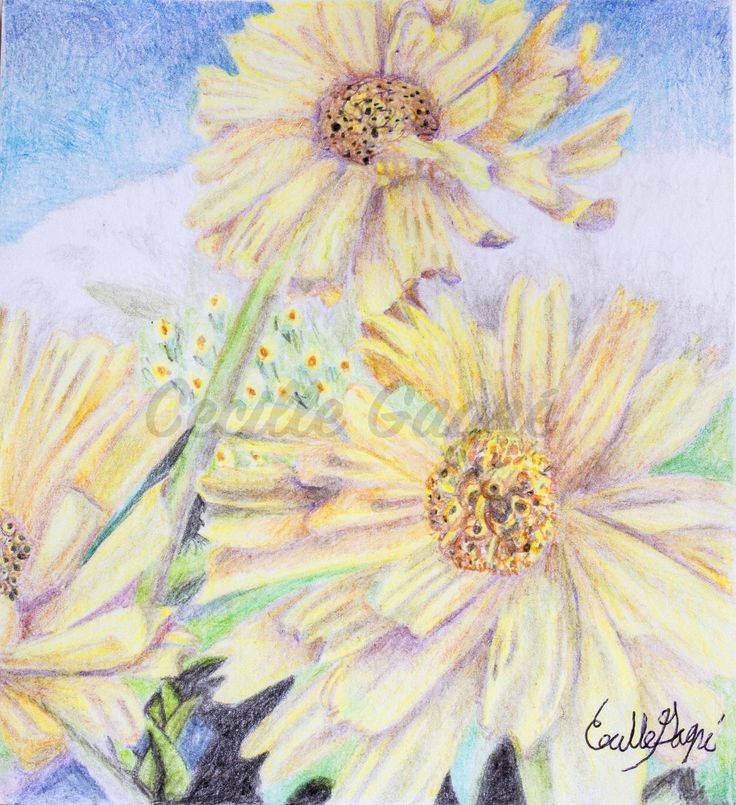 Yellow Daisies by CecilleGagne on Etsy