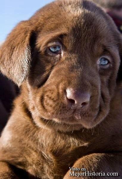 30 Perritos y gatos mas adorables y tiernos | Mejor Historia                                                                                                                                                      Más